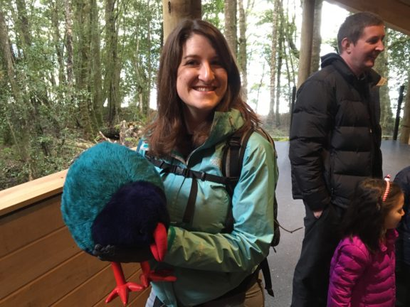 Actual size and look of a takahe