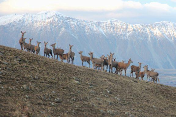 Deer send-off!