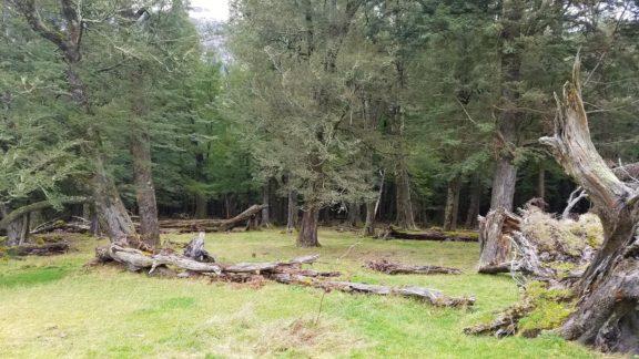 Lothlórien Forests of Mount Aspiring National Park